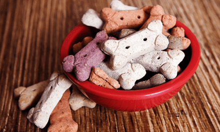 Prepping Ingredients for Homemade Dog Treats