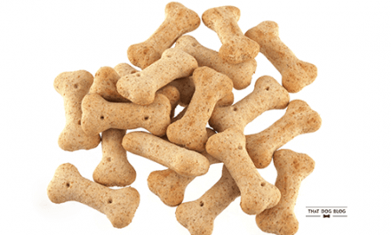 Homemade Dog Treat Recipes: Things To Avoid