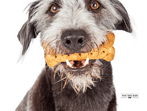 Homemade Dog Treats That Fight Bad Breath