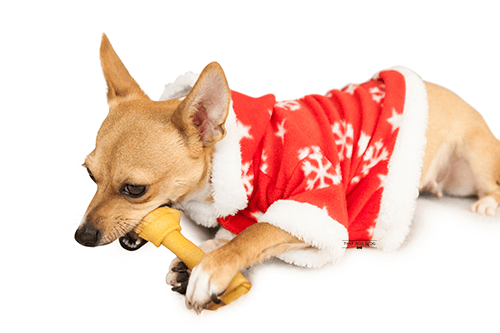 Best Ingredients for Dog Treat Recipes You Can Make at Home