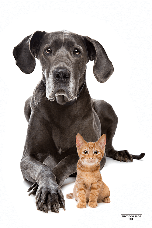 Dogs and Cats Who Are Friends