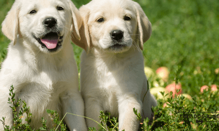 Puppies and Exercise – Not So Much