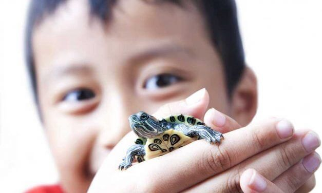 The Difference in Turtles and Tortoises as Pets