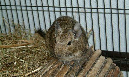 Straw Mats for Degu Lounging