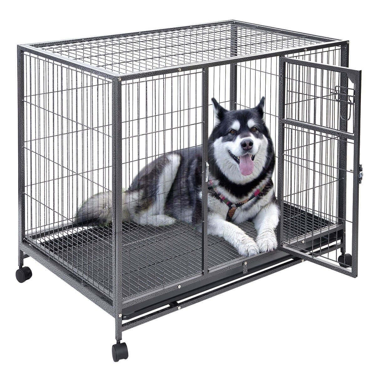Dog Crate Safety