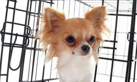 The Best Dog Crates | A Guide For Dog Owners
