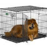 10 Reasons Your Dog's Crate Is Important