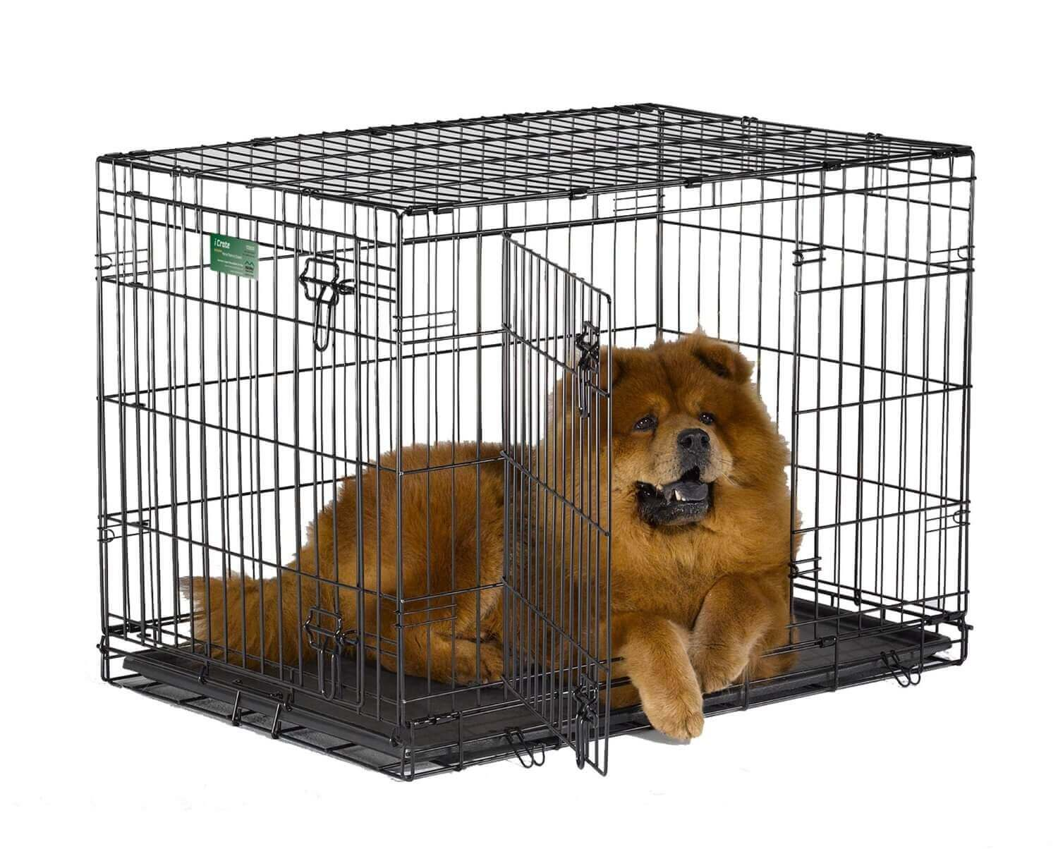 how to choose the best dog crates that won't break the bank - pin it on pinterest