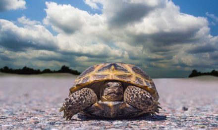 Box Turtle Basics – Facts To Get You Started
