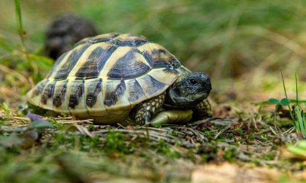The Ultimate Guide to Feeding your Box Turtle
