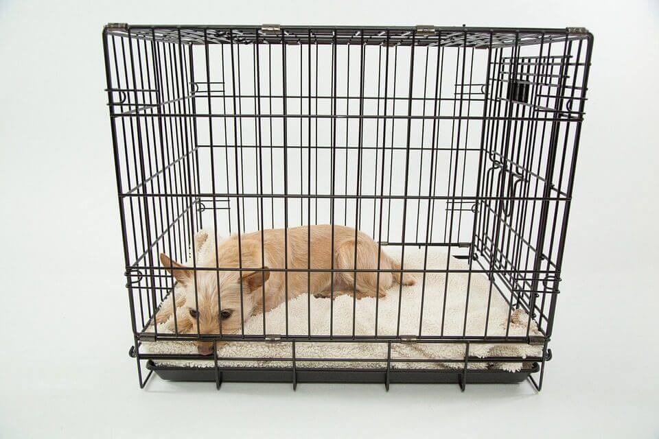 Best Dog Crate For Your Dog