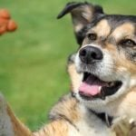 """Healthy Dog Treats That Will Make Your Pup Go """"Woof!"""""""