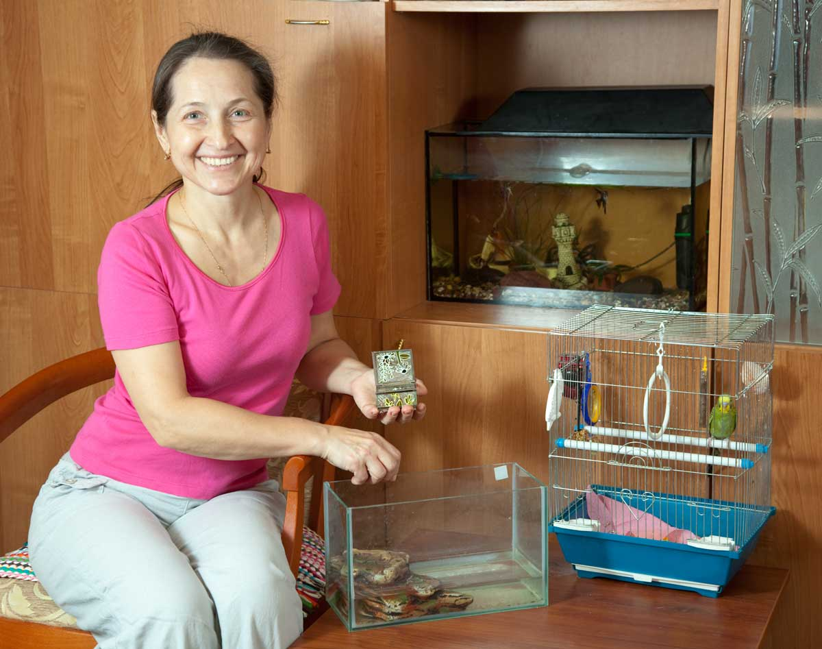 Everything you need to know about caring for baby box turtles for Aquarium heizung