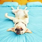 Pulverize The Parasites! 4 Dog Flea Treatment Options For You To Try