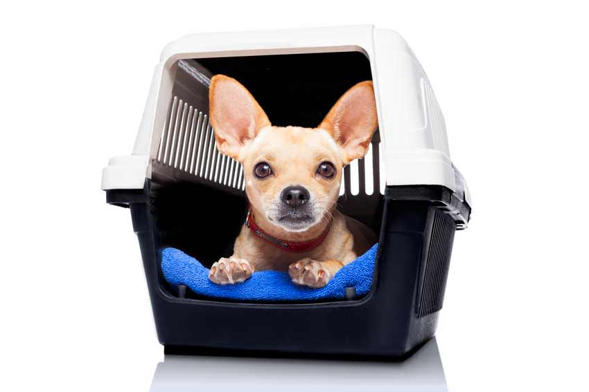 Choose The Right Crate Size For Your Dog | A Simple Guide