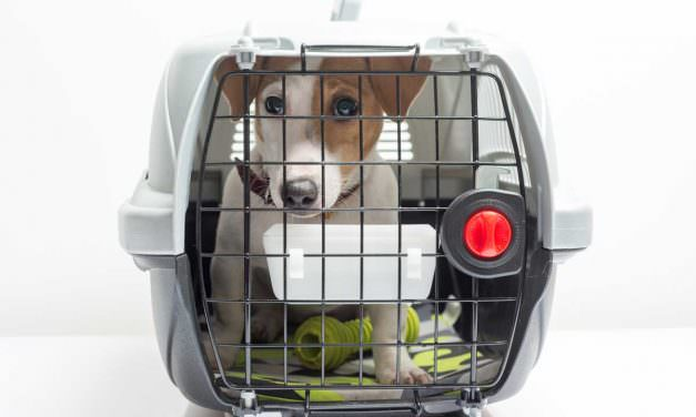 Puppy Crates For Puppies With Separation Anxiety