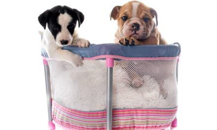 Awesome Puppy Playpens For Owners Who Want Good Value