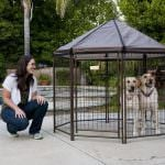 Review: The Advantek Pet Gazebo