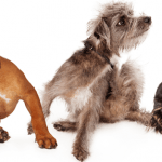10 Things You Need To Prevent Your Dog From Getting Fleas