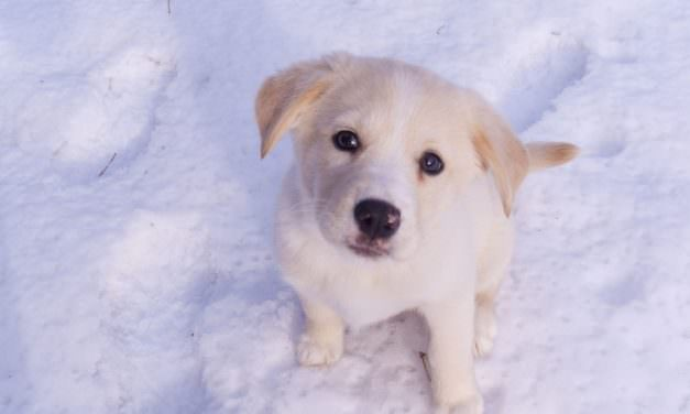 Winter Wonderland: Canine Care Accessories For Indoor Crates And Outdoor Kennels