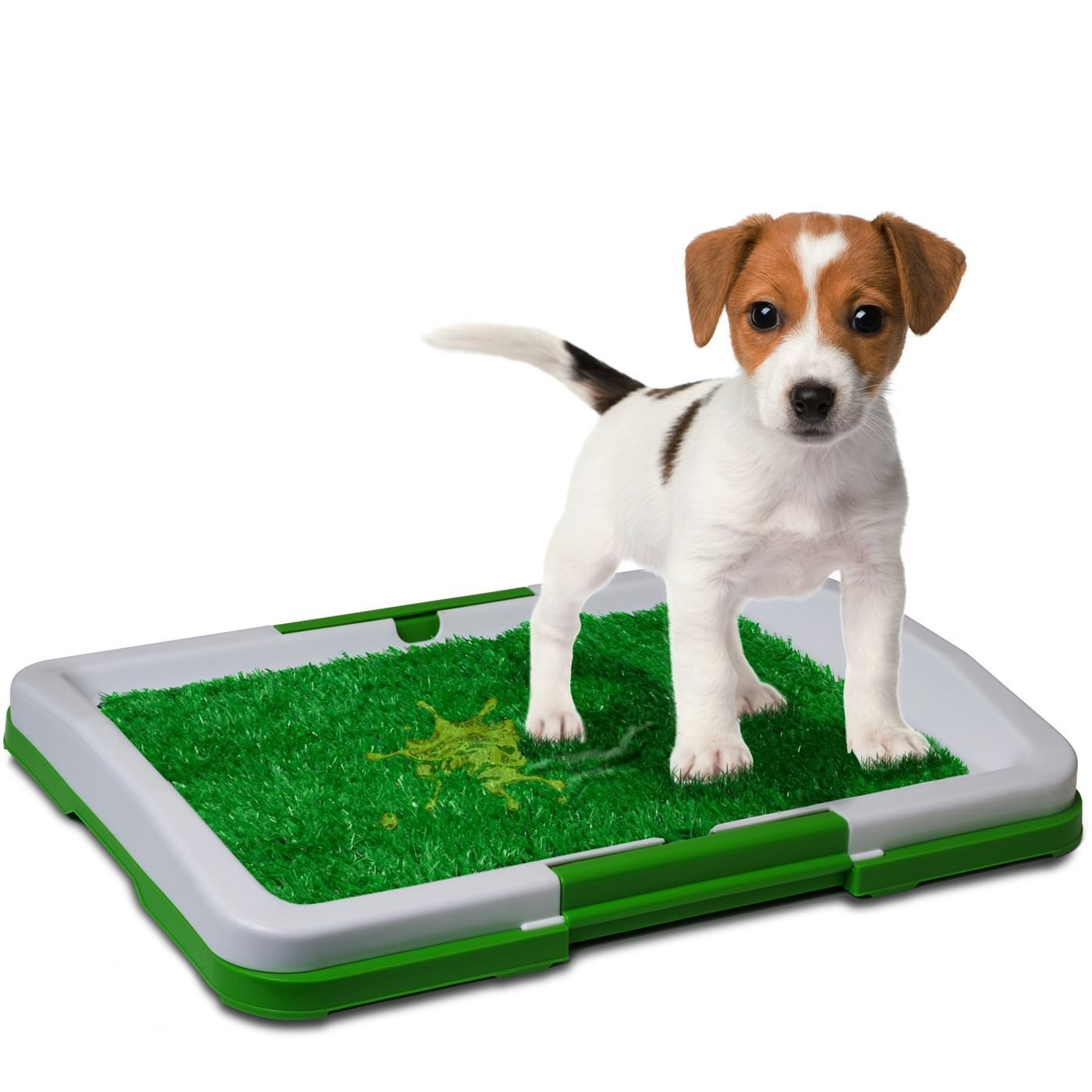 How To Get Dog To Use Puppy Pad