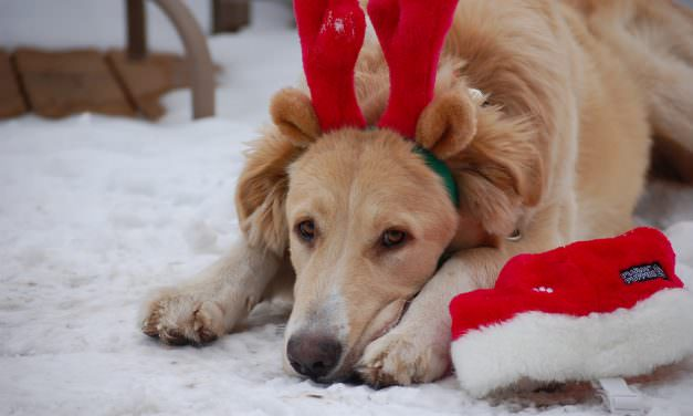 10 Great Gifts For Dog Lovers