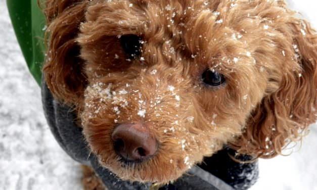 Keeping Your Dog Warm: Kennel Floor Heaters And Other Options