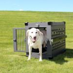 8 Great Features Of The Impact Case Collapsible Dog Crate