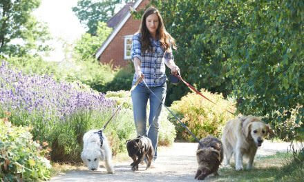 Exercise My Dog: Dog Walking Services