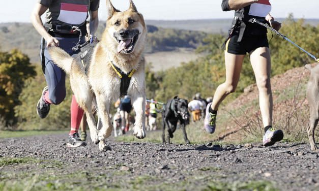 Exercise and Dogs with Diabetes